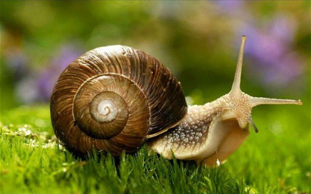 Śluz ślimaka odmładza naszą skórę