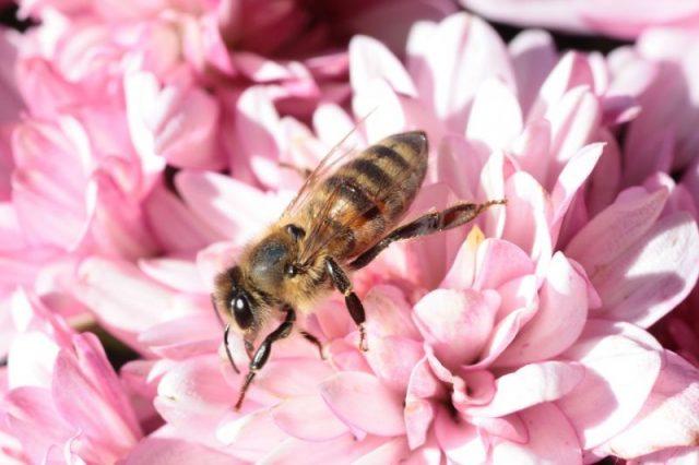Alergia – irracjonalna walka organizmu